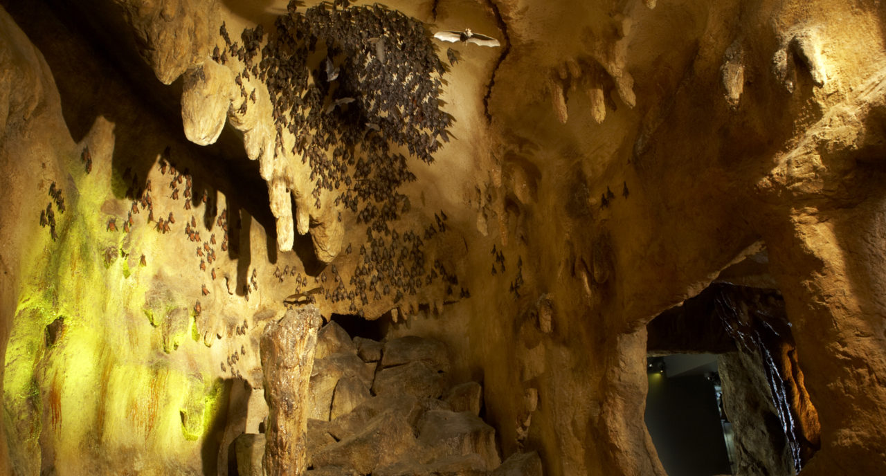 Photo of Bat Cave at the ROM